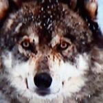 Profilbild von Mukti